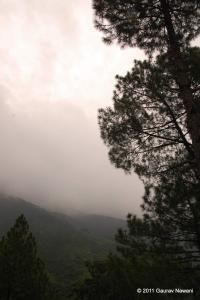 A tree in Fog near Tehri